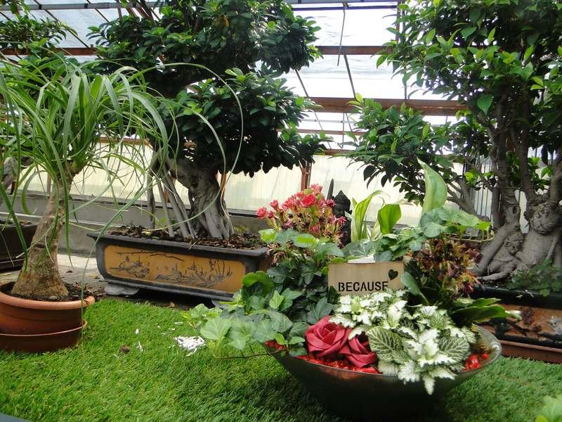fioreria-brembati-piante-fiori-vasi-10