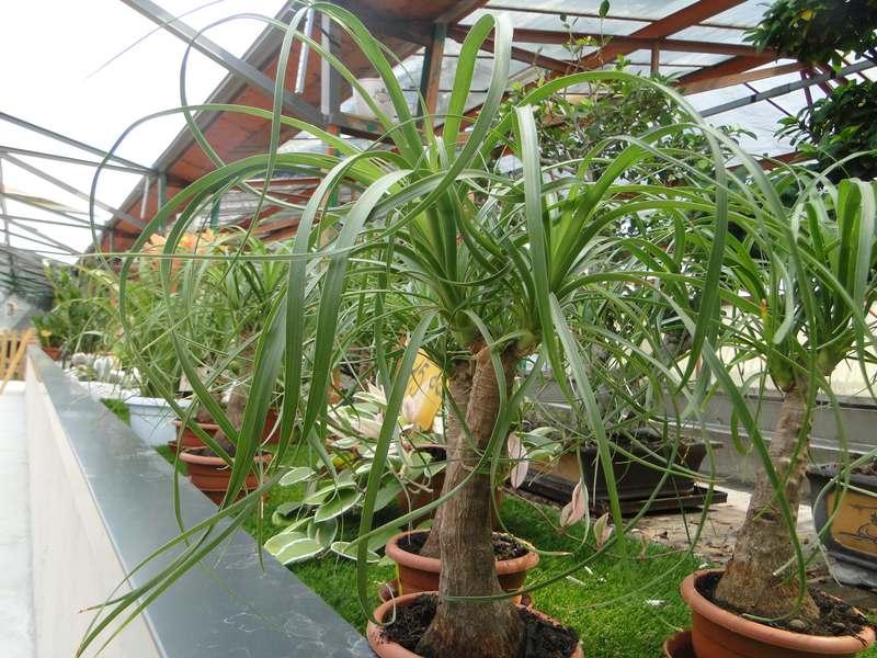 fioreria-brembati-piante-fiori-vasi-11