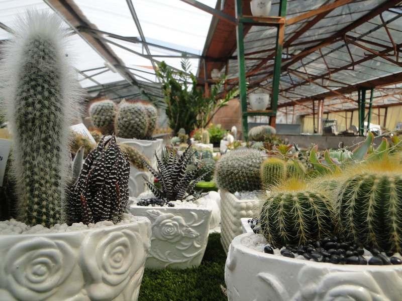 fioreria-brembati-piante-fiori-vasi-12