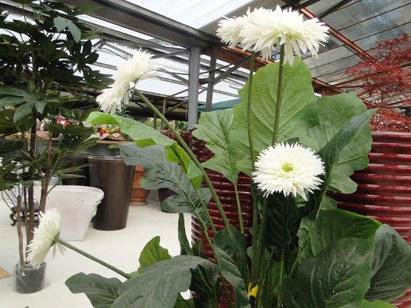 fioreria-brembati-piante-fiori-vasi-18