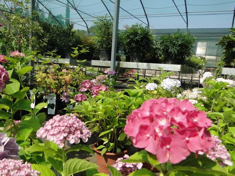 fioreria-brembati-piante-fiori-vasi-2