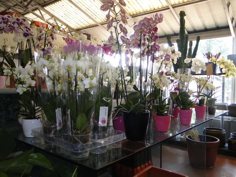 fioreria-brembati-piante-fiori-vasi-22