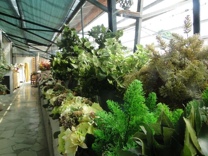 fioreria-brembati-piante-fiori-vasi-23