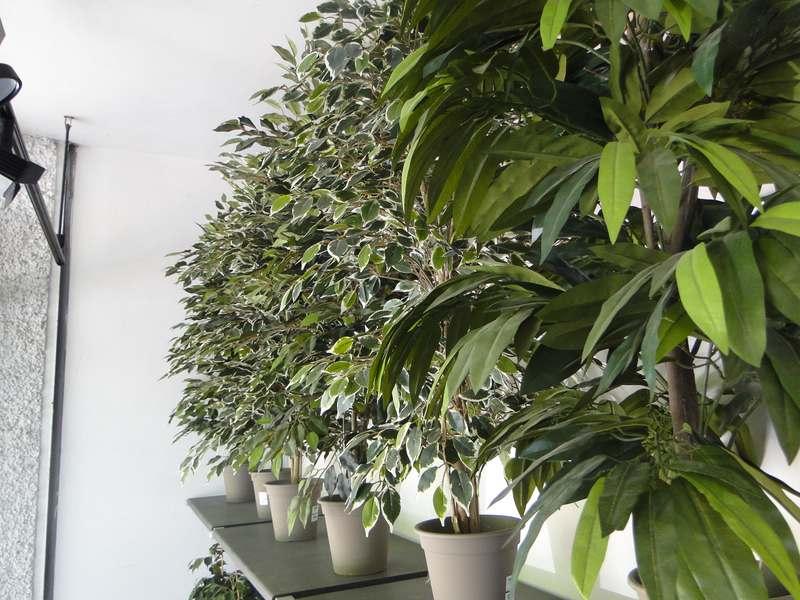 fioreria-brembati-piante-fiori-vasi-29