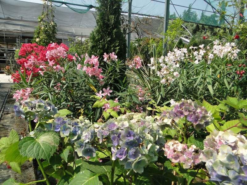 fioreria-brembati-piante-fiori-vasi-3