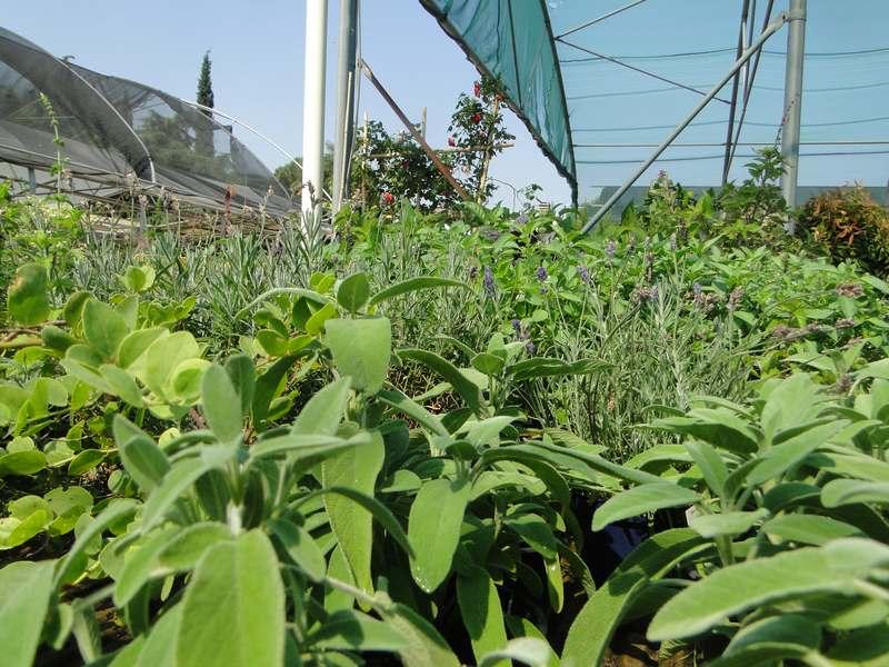 fioreria-brembati-piante-fiori-vasi-4