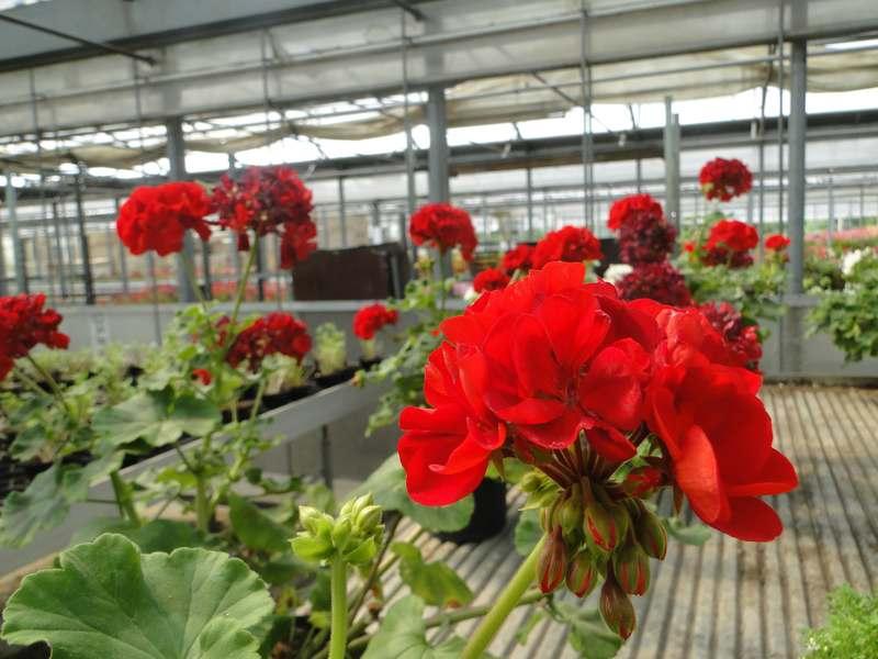fioreria-brembati-piante-fiori-vasi-6
