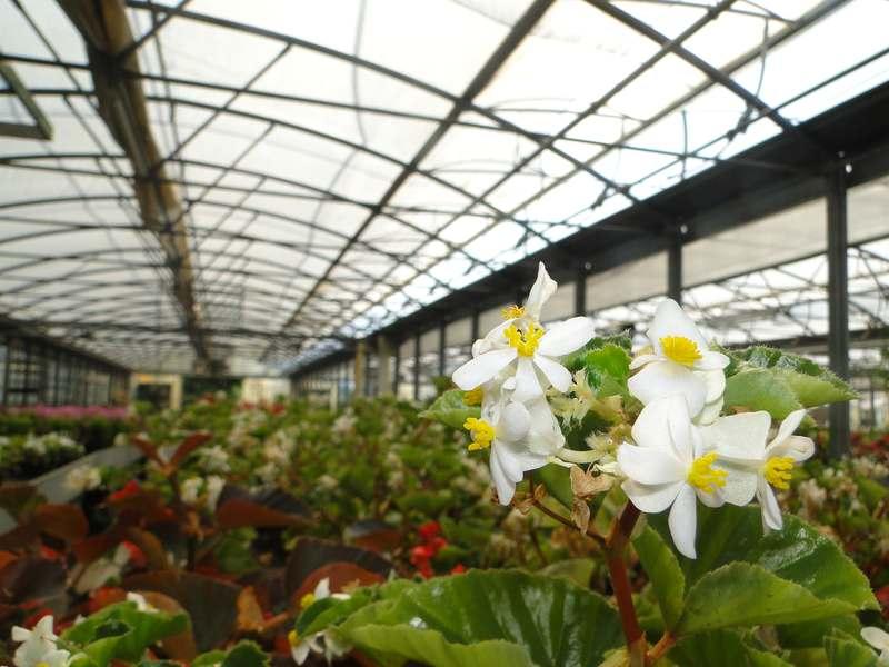 fioreria-brembati-piante-fiori-vasi-7
