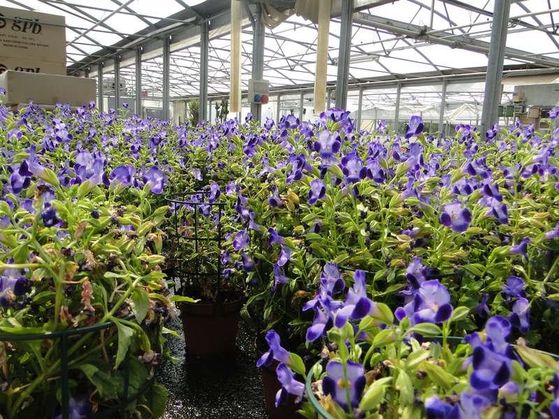 fioreria-brembati-piante-fiori-vasi-8