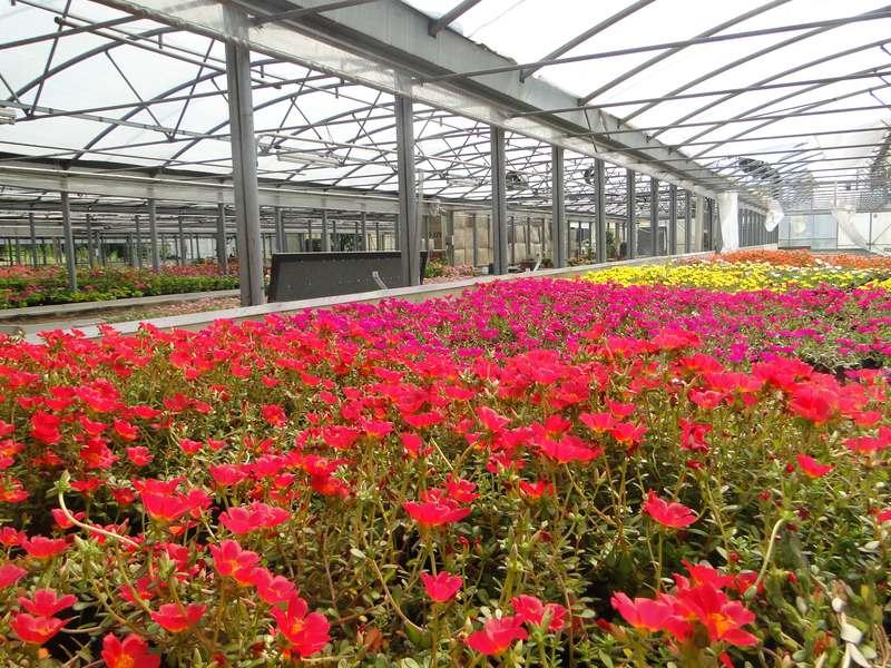 fioreria-brembati-piante-fiori-vasi-9