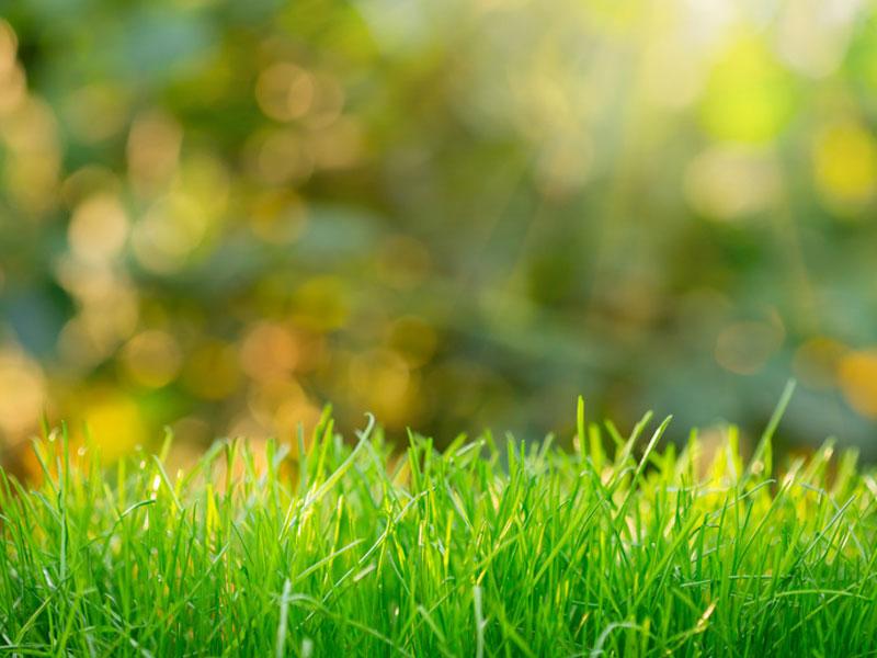 cura del verde a brescia