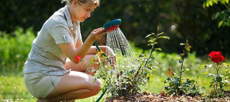 lavori-del-mese-giardino-giugno_NG2